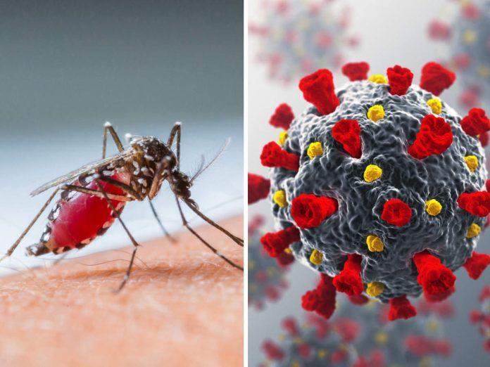 Covid and Dengue - කොවිඩ් වසංගතය හෙතුවෙන් ඩෙංගු වෛරසය වඩාත් භයානක වන්නේ ඇයි?