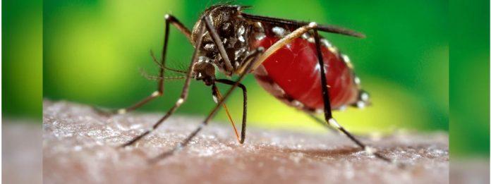 Dengue - ඩෙංගු හිස එසවීමේ බරපතළ අවදානමක්! මේ රෝග ලක්ෂණ පවතී නම් වෛද්යවරයෙක් හමුවන්න!!
