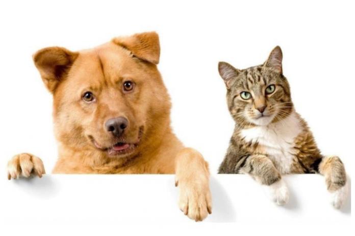 Corona by pets - සතුන්ගෙන් මිනිසාට කොරෝනා වෛරසය බෝවනවාද?